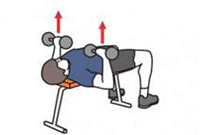 A person is performing a Dumbbell Bench Press.
