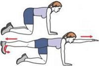 The images depict a person performing a core exercise called Birddog.